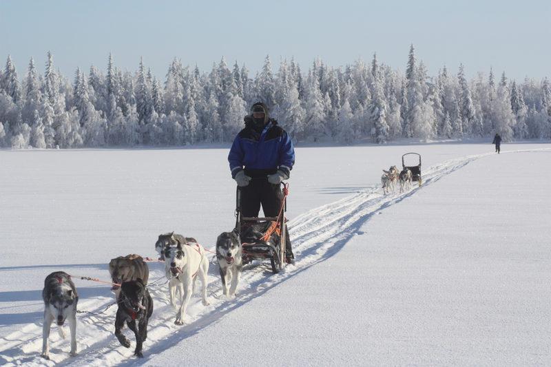 Koiravaljakolla liikenteeseen - Valjakoilla on mukava kiitää lumisessa maisemassa