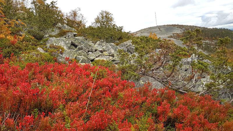 Maaruska upeimmillaan - Maaruska Pyhä-Luoston kansallispuistossa leimuaa punaisena.