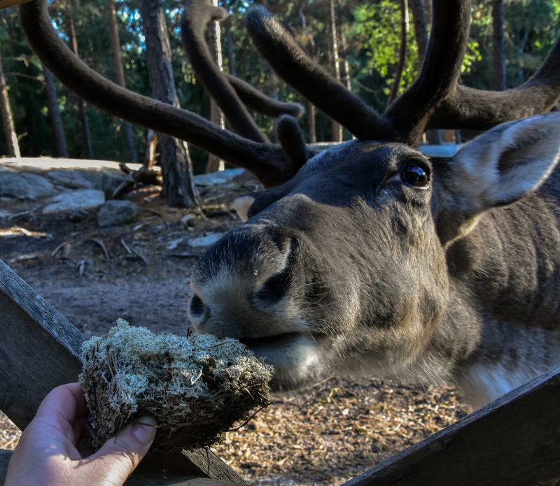 Private family visit to the Reindeer Park – SPECIAL OFFER, VALID UNTIL 19th OF APRIL
