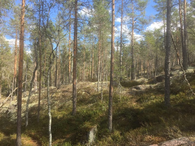 Time travel through the history of the Hämeenkangas forests