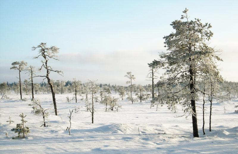 Taikapolku Levanevan pitkoksilla - Talvi on hiljaista aikaa Levanenvan erämaisissa maisemissa. Pakkassäällä soihin tutustuminen on monin verroin leppoisampaa kuin kesäkuumalla.