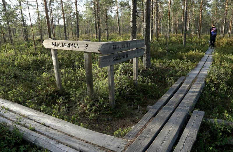 Taikapolku Levanevan pitkoksilla - Pitkoksilla on helppo kävellä vaikka Särkisten maisemiin. Taikapolun retkillä pitkoksilla voidaan kävellä pitempin lenkki.