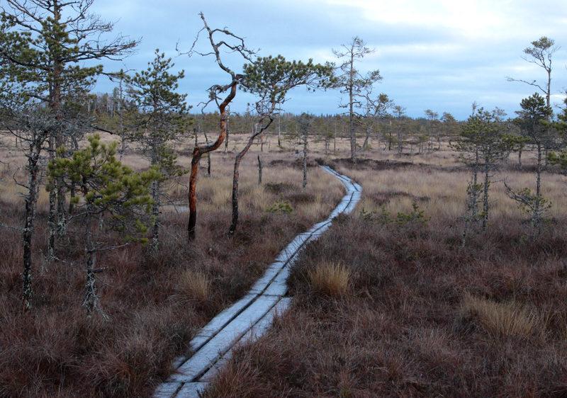 Taikapolku Levanevan pitkoksilla - Pitkät pitkosreitit antavat mahdollisuuden sukeltaa nevojen ja aapojen tunnelmaan Taikapolun retkellä.