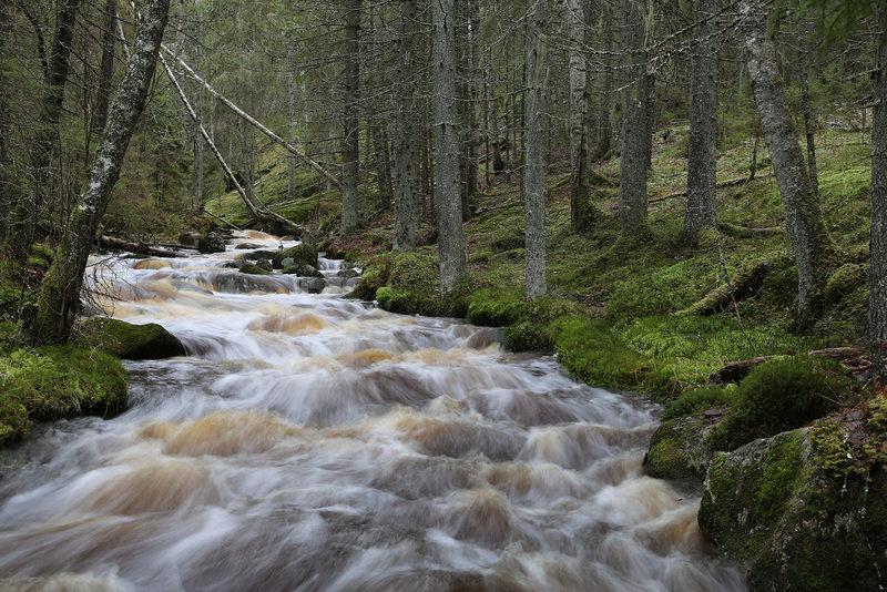 Taikapolku puronvarsilla - Syksyn sateet nostavat veden nopeasti korkealle. Joskus vettä riittää reilusti pitkälle talveen.