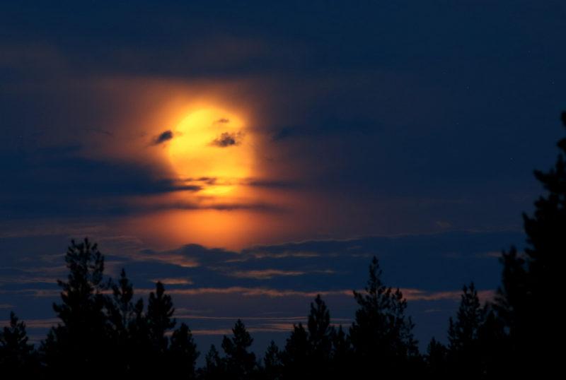 Taikapolku Kauhanevan pitkoksilla - Kauhanevan valoista kesäyöt kätkevät tähdet, mutta kirkas kuu esiintyy myös kesäisellä taivaalla.