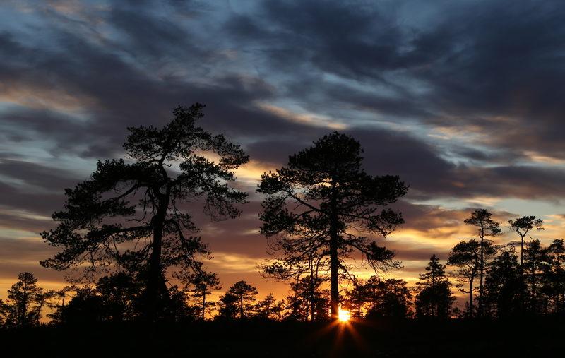 Taikapolku Kauhanevan kesäyössä - Keskikesällä Kauhanevalla on lähes yötön yö, sillä aurinko katoaa horisontin alle vain hetkeksi.
