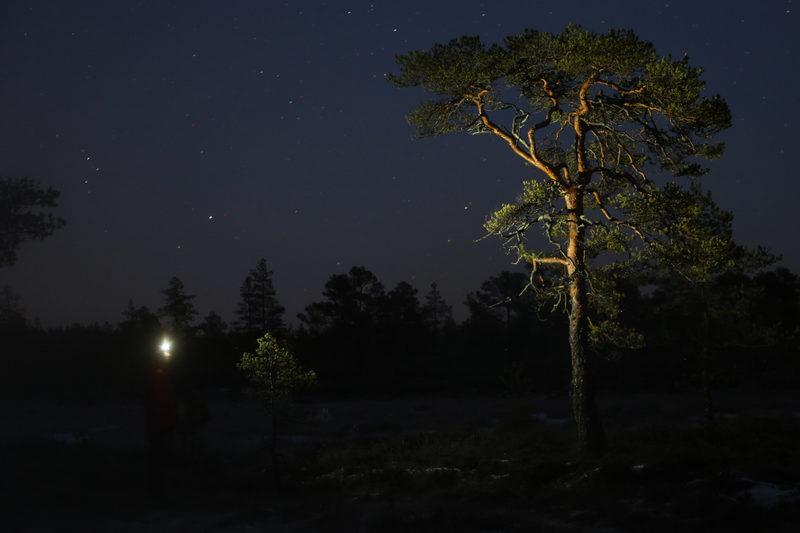 Taikapolku Kaamosen valoissa - Taikapolun retki Lauhanvuoren kansallispuiston maisemiin virittää aistit hämärän metsän taajuudelle.