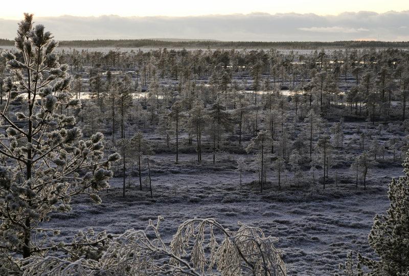 Taikapolku Kauhanevan luontotornissa - Kauhanevan kierroksen voi tehdä myös ensilumen aikaan.