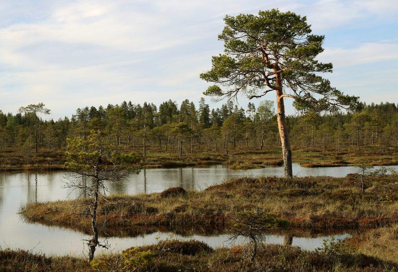 Taikapolku Lauhanvuoren soilla - Taikapolun Lauhan klassikko esittelee hienoja näytteitä Lauhanvuoren kansallispuiston monipuolisista soista.