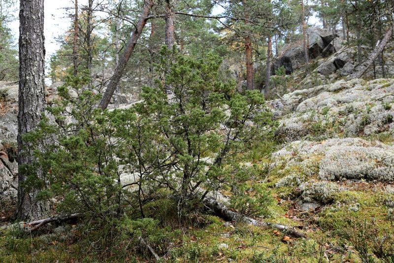 Taikapolku Pyhävuoren kalliometsissä - Taikapolun retkillä liikutaan Kristiinankaupungin Pyhävuoren vaihtelevilla poluilla.