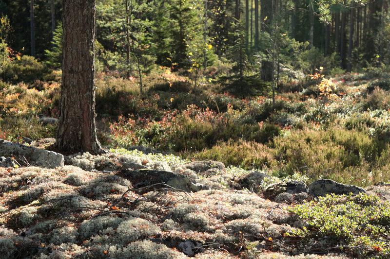 Taikapolku Susiluolan varjoissa - Taikapolku vie retkelle Susiluolaan ympävöiviin maisemiin. Syksyllä ruska luo tunnelmaa.