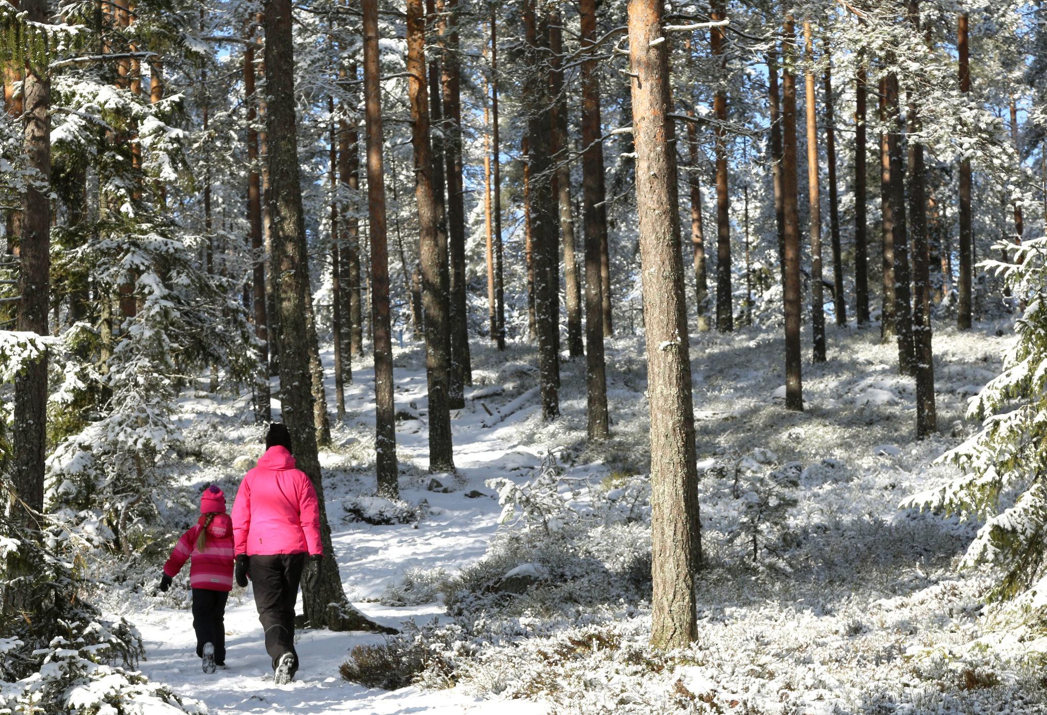 Taikapolku Susiluolan varjoissa - Susiluolaan voi lähteä tutustumaan ympäri vuoden, joko hieman pitemmän tai lyhyemmän kävelyn kautta.