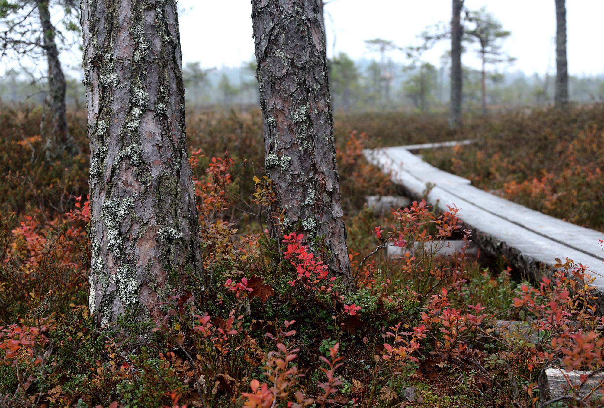 Taikapolku retkilahja - Retki luontoon on hyvä lahja monenlaisteen tilanteeseen.