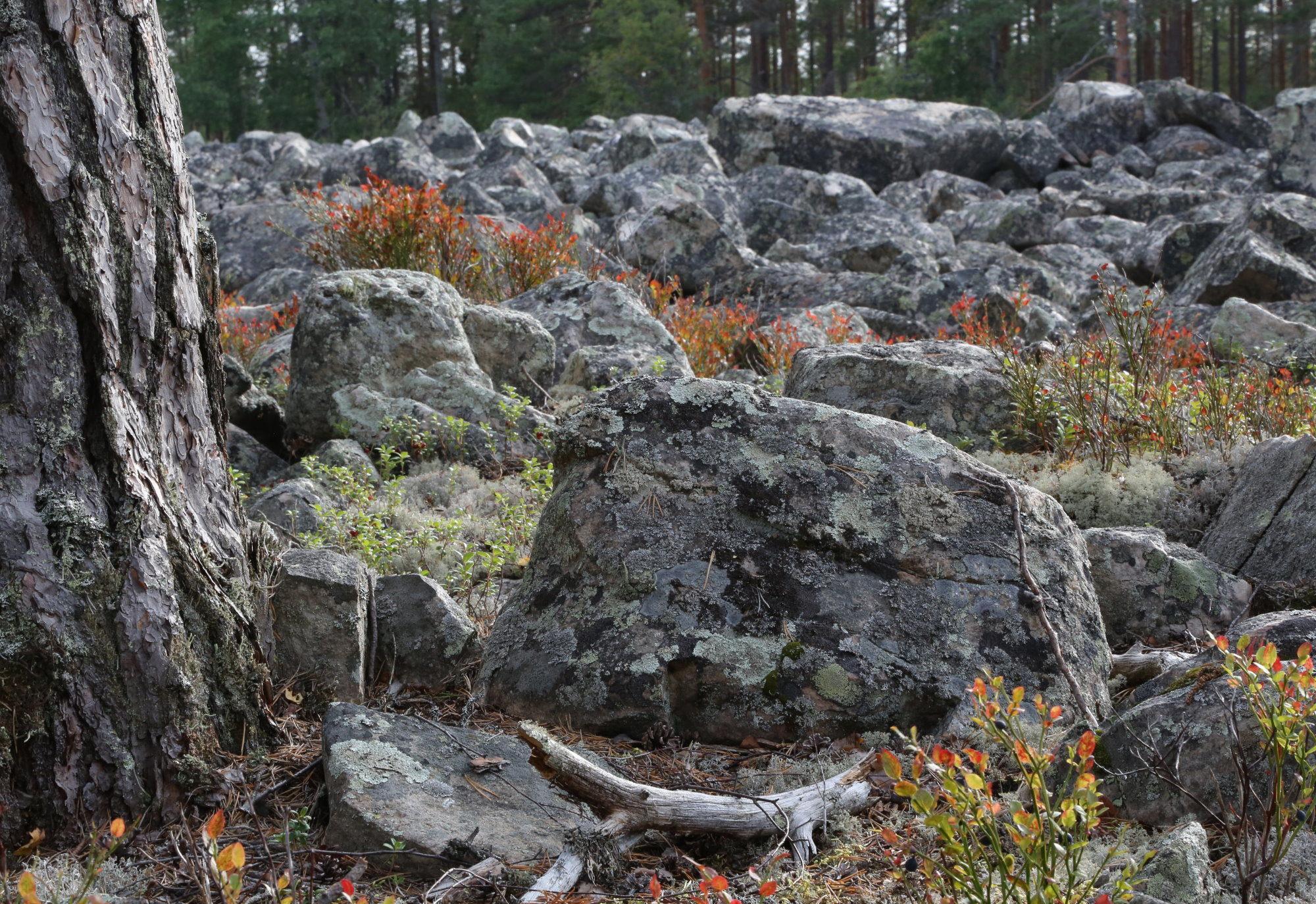 Lauhanvuoren kansallispuiston Kivijata - Lauhanvuoren kansallispuisto on Lauhanvuori-Hämeenkangas Geoparkin ytimessä.