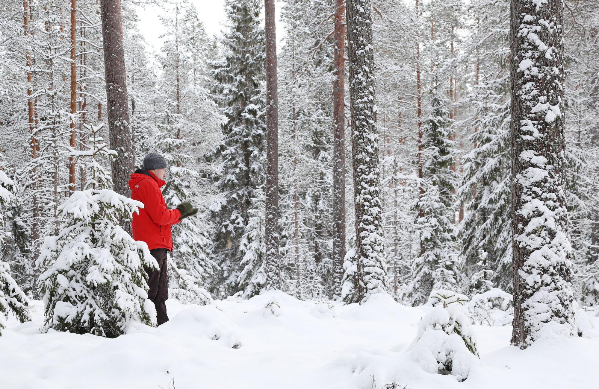 Taikapolku lumikenkäretki Lauhanvuoren rinteillä - Lauhanvuorella talven lumitilanne vaihtelee nopeasti, mutta parhaimmillaan lunta voi olla maisemassa mukava määrä.