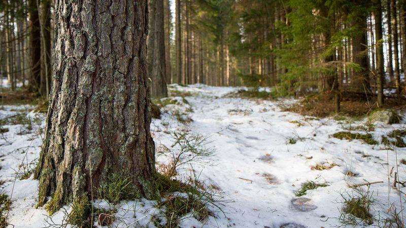 Verlan Metsätietopolku