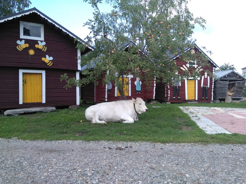 Tonin Farmi, Kaustinen