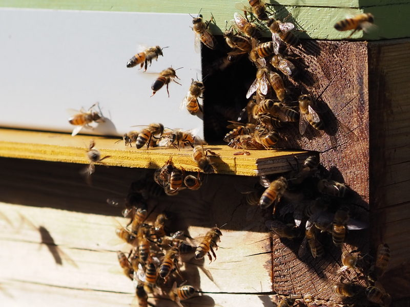 Mehiläismeditaatio, Kokkola