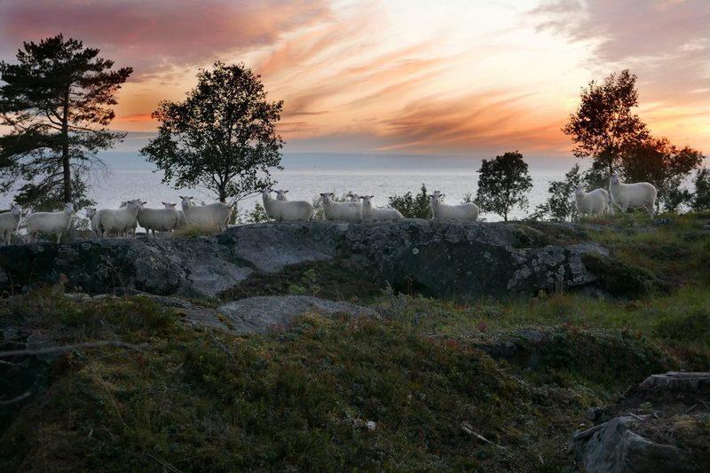 Retkibussin reitillä, Kokkolan kansallinen kaupunkipuisto