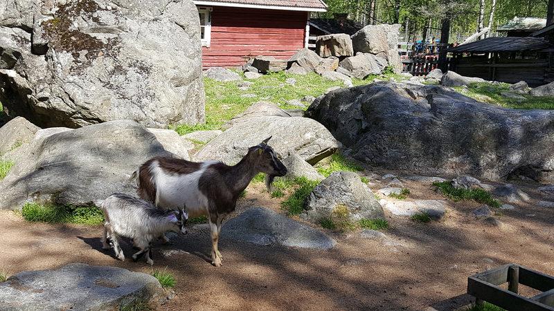Retkibussin reitillä, Toivosen Eläinpuisto
