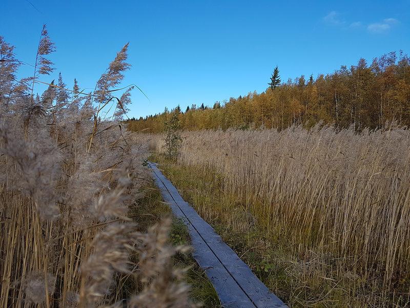Laajalahden luontopolku 3,5 km