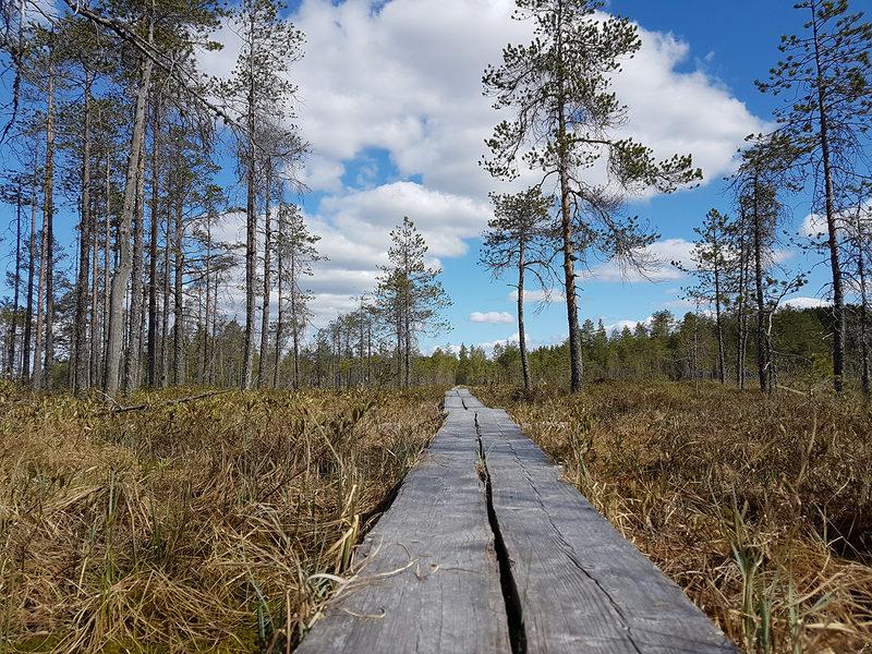 Salamajärvi - Jyrkkäniemi kohdereitti, 10,5 km