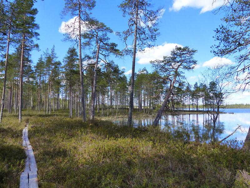 16 lähteen Valkeisjärven rengasreitti 5,4 km, Lestijärvi