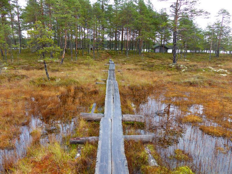 Iso-Valkiaisen kohdereitti 1,5 km, Lestijärvi