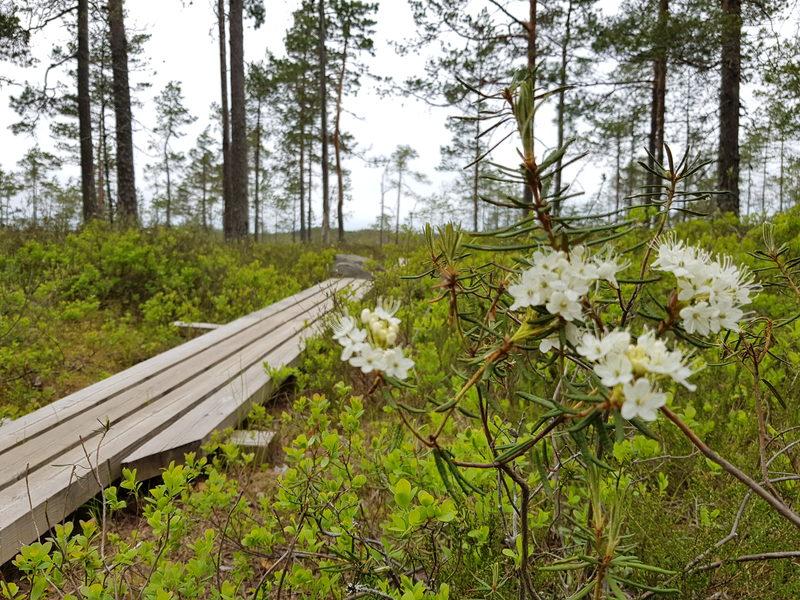 Luontoretki Isonevan suolle Pomarkkuun su 4.10. klo 12 alkaen