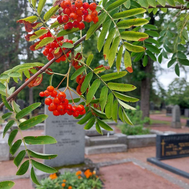 Mausoleumin, kappelien ja paasien tarinaa- Puistokävely Käppärän hautausmaalla