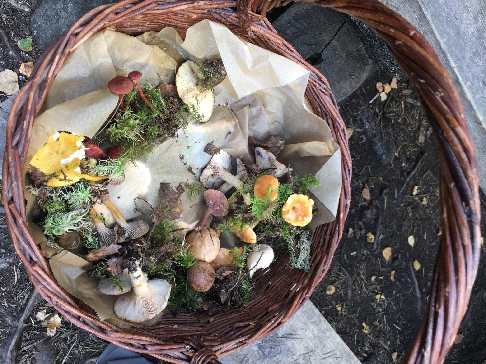 Mushroom Tour in Hämeenlinna
