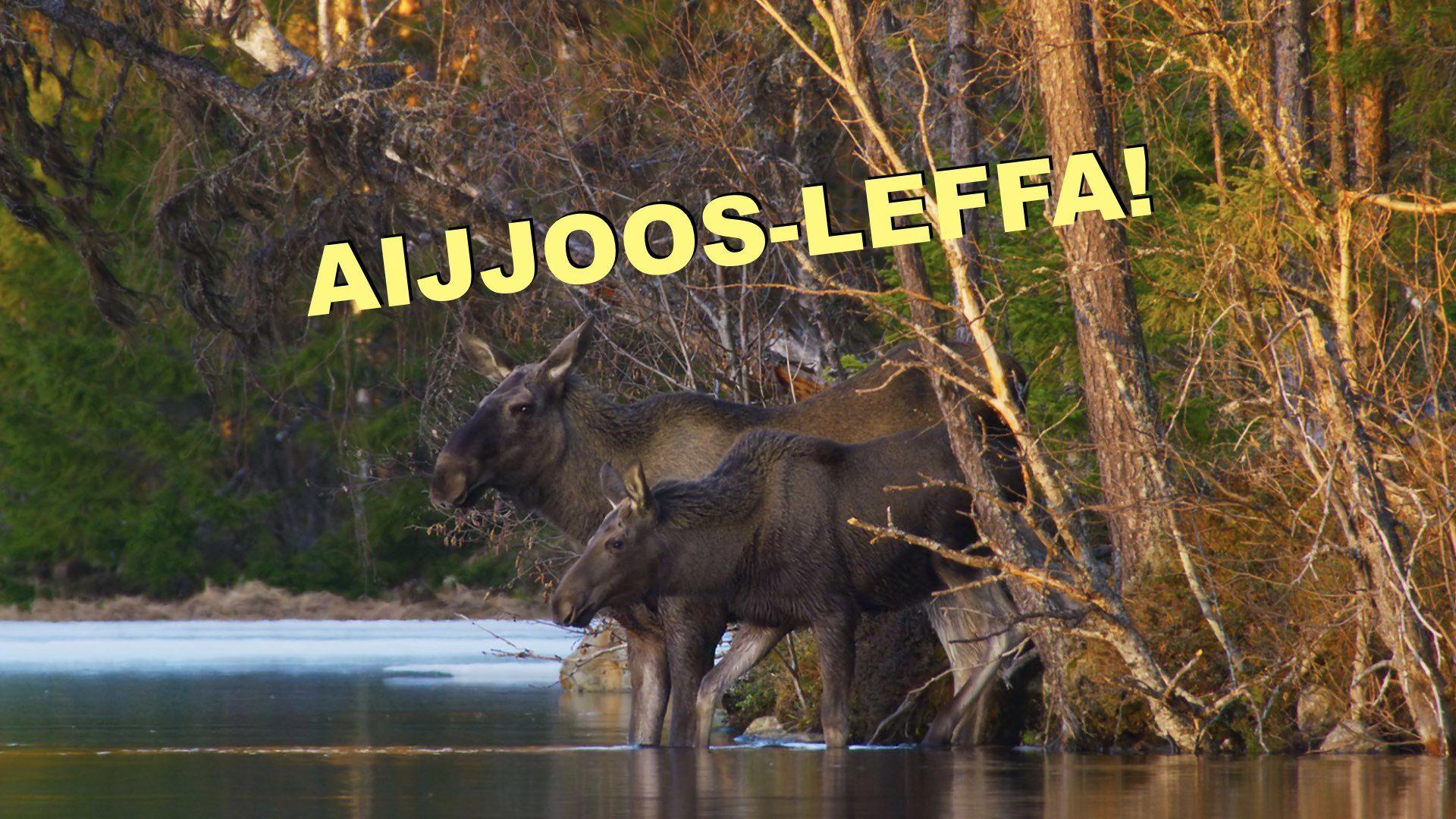 AIJJOOS-LEFFA: Luontosinfonia